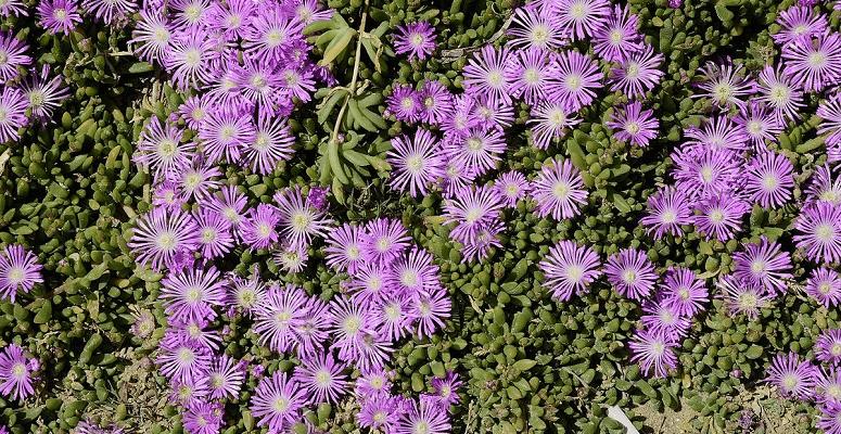 Top 9 drought tolerant plants - Magazine